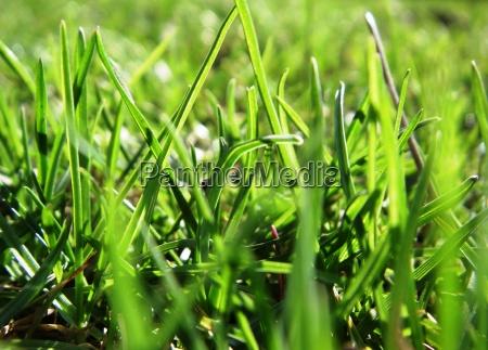 grass no verde 2