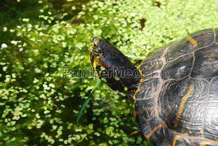 conservazione della natura biotopo tartarughe acqua