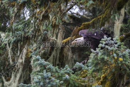 viaggio viaggiare colore albero americano uccello