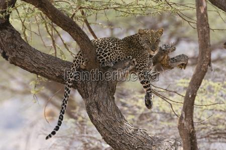 viaggio viaggiare colore albero africa kenia