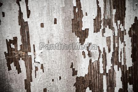 primo piano close up colore antico